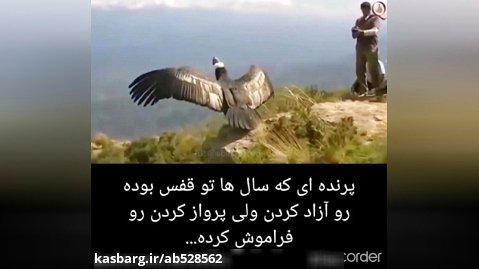 ویدیو غمگین