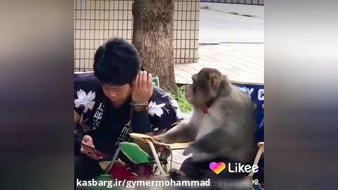 کلبپ خنده دار میمون