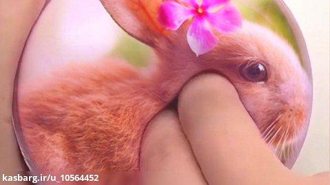 اسلایم فتوشاپ خرگوش (درخواستی) کپی فقط برای کسی که درخواست کرده ازاد