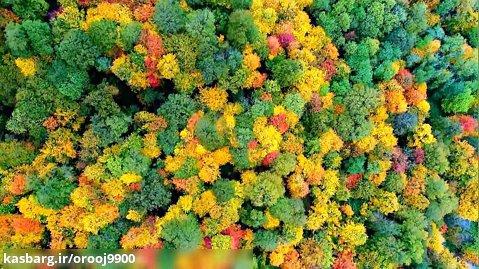 ویدیویی از جنگل های هیرکانی ایران
