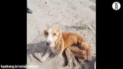نجات دادن سگی که نمیتواند روی  پاهایش بایستد