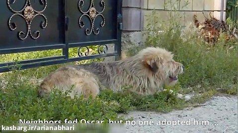 نجات دادن سگی که صاحبش خانه را فروخته